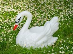 Lillepotid SWAN L