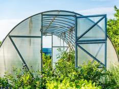 kasvuhooned